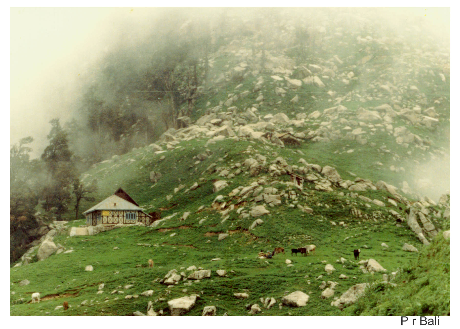 Triund Dhauladhar hills Kangra valley 9325 ft image P r Bali